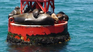Anuradha Bhosale watches seals, whales and dolphins near dana Point