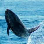 India Proclaims the Emancipation of its Cetaceans