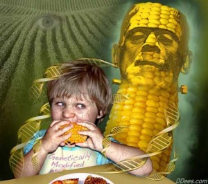 GMO frankencorn is BAD