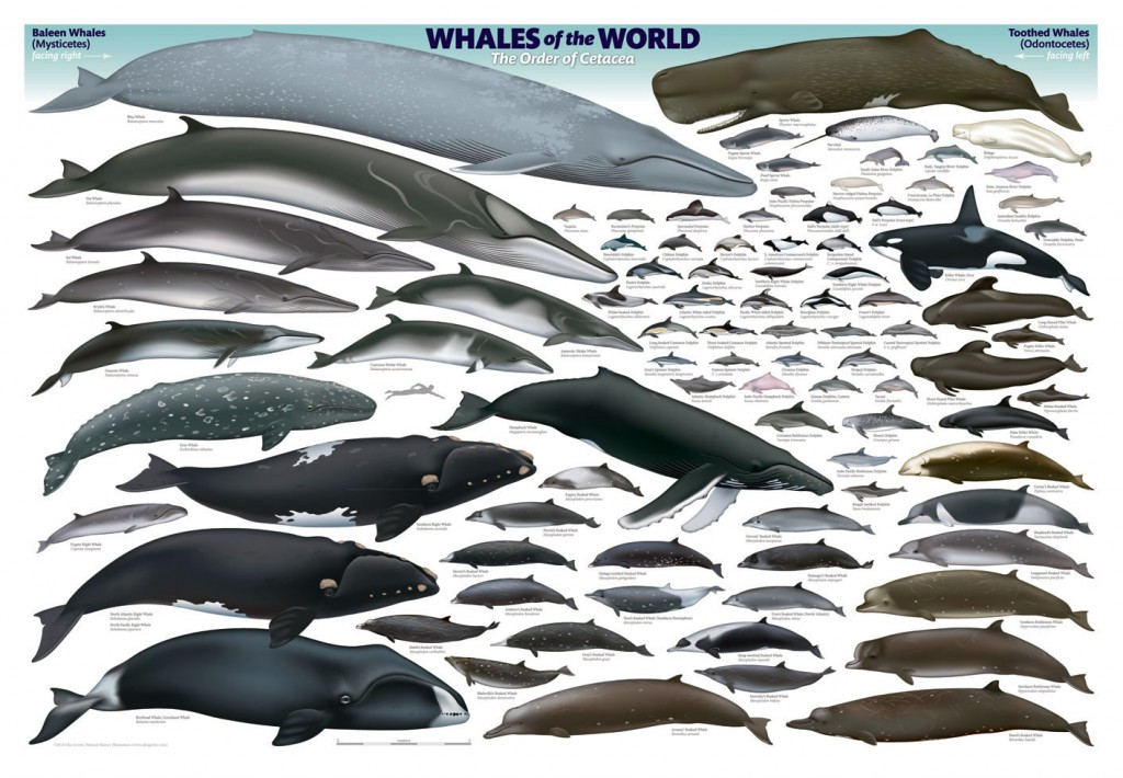 Whales and Dolphins ar non-human persons says India