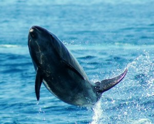 dolphins and other cetaceans are emancipated in India